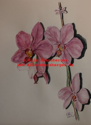 14. Orchideen