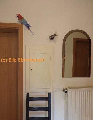 Papagei auf der Tür